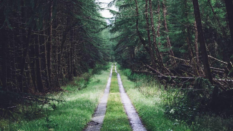 Gradnja gozdnih cest in vlak