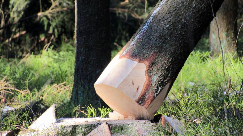 Posek lesa