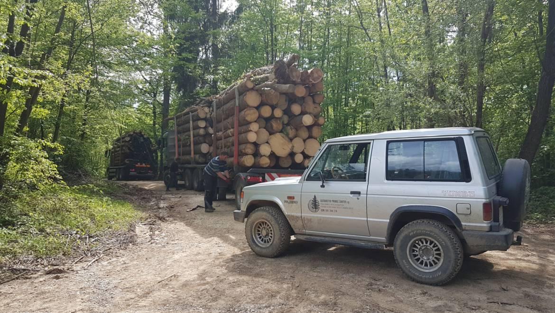 Odkup lesa na kamionski cesti