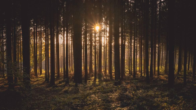 Upravljanje z gozdovi